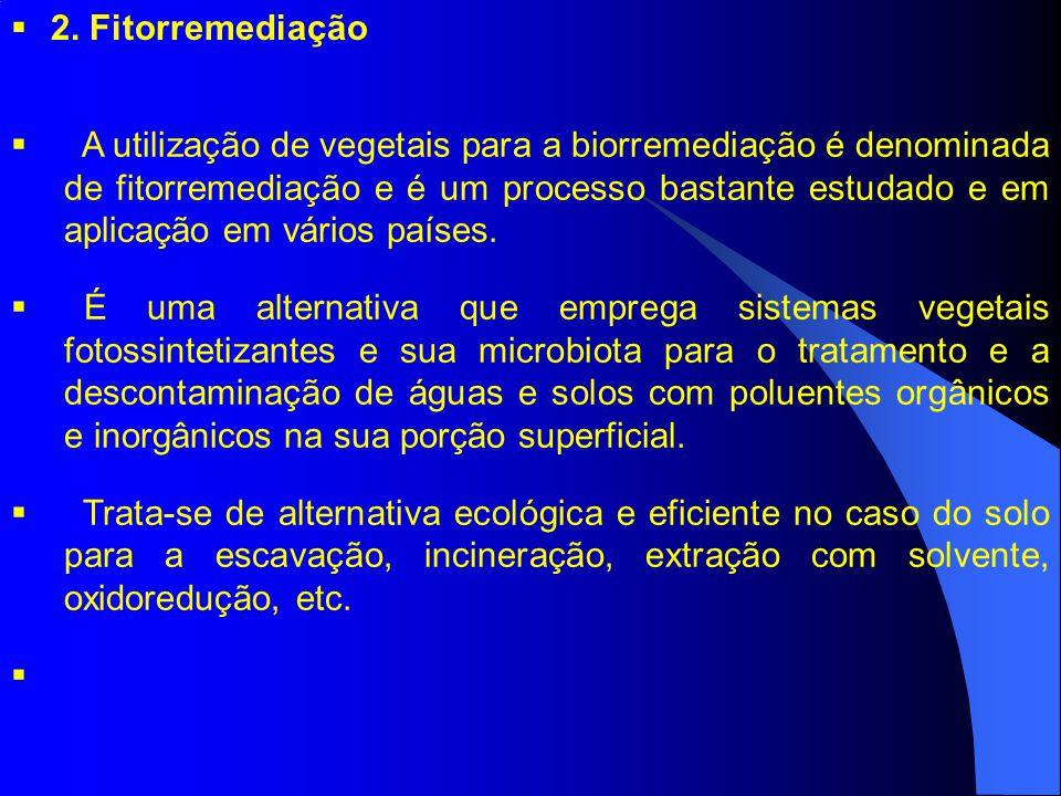 2. Fitorremediação A utilização de vegetais para a biorremediação é denominada de fitorremediação e é um processo bastante estudado e em aplicação em