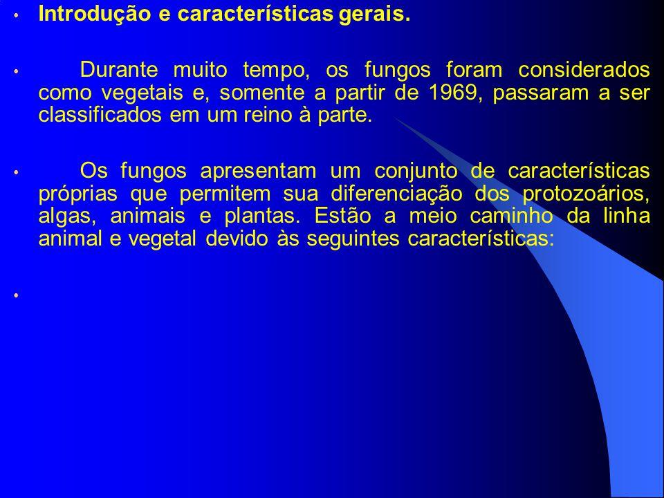 4.Fungos terrestres. 4.3 Basidiomicetes.
