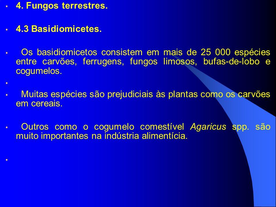 4. Fungos terrestres. 4.3 Basidiomicetes. Os basidiomicetos consistem em mais de 25 000 espécies entre carvões, ferrugens, fungos limosos, bufas-de-lo
