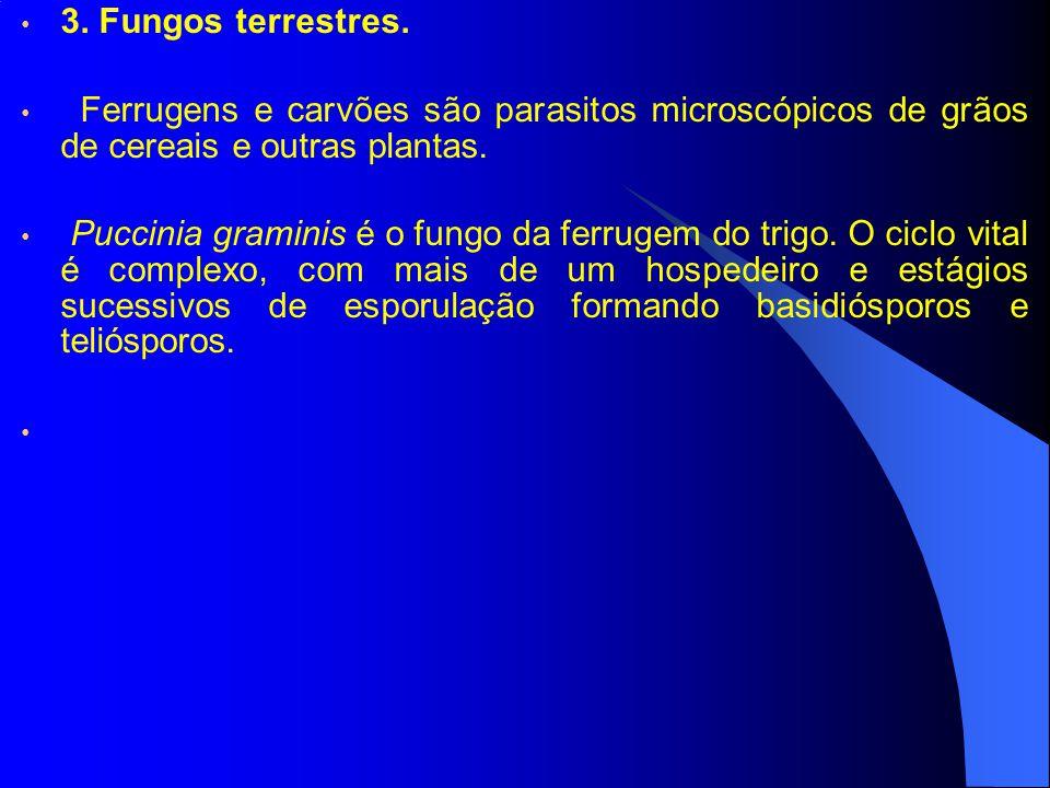 3. Fungos terrestres. Ferrugens e carvões são parasitos microscópicos de grãos de cereais e outras plantas. Puccinia graminis é o fungo da ferrugem do