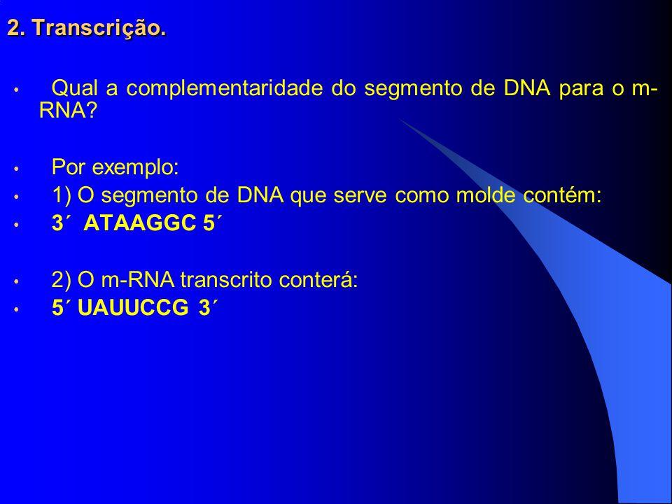 2.Transcrição. Qual a complementaridade do segmento de DNA para o m- RNA.