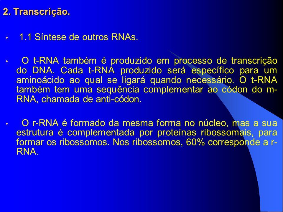 2.Transcrição. 1.1 Síntese de outros RNAs.