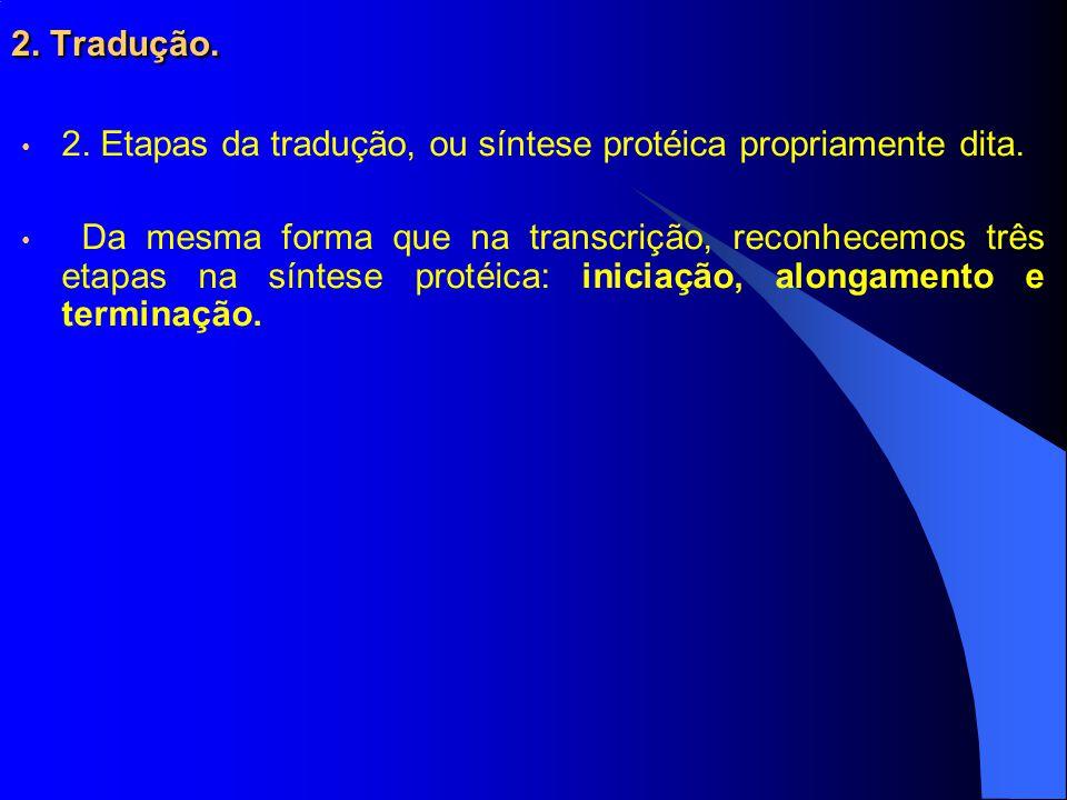 2.Tradução. 2. Etapas da tradução, ou síntese protéica propriamente dita.