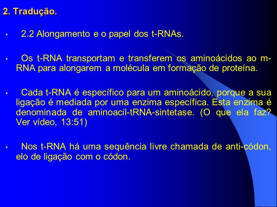 2.Tradução. 2.2 Alongamento e o papel dos t-RNAs.