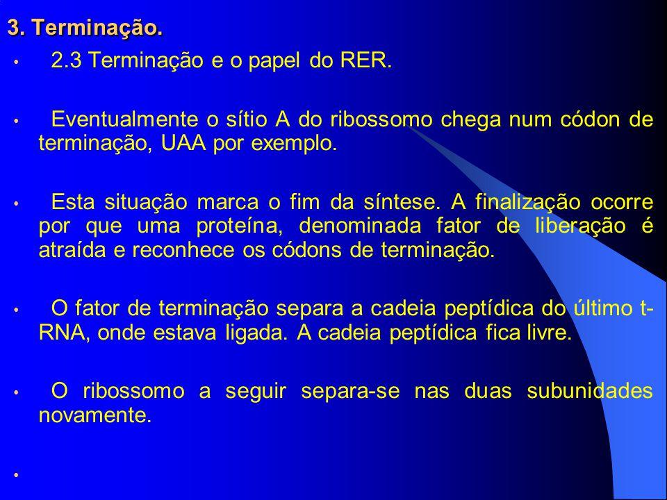 3.Terminação. 2.3 Terminação e o papel do RER.
