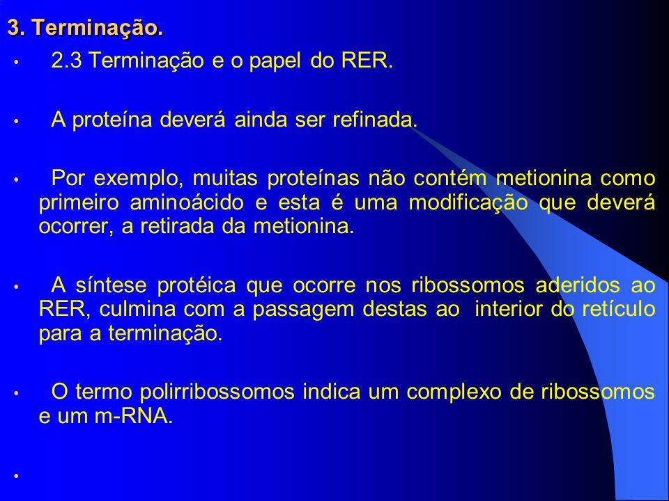 3.Terminação. 2.3 Terminação e o papel do RER. A proteína deverá ainda ser refinada.