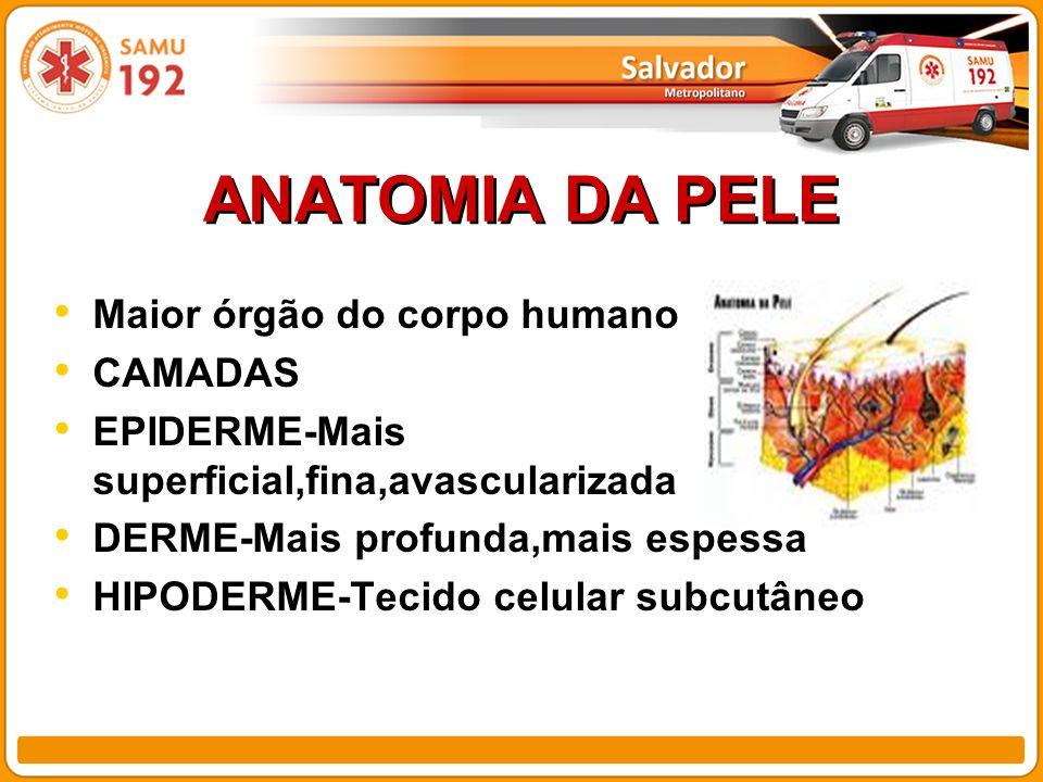ANATOMIA DA PELE Maior órgão do corpo humano CAMADAS EPIDERME-Mais superficial,fina,avascularizada DERME-Mais profunda,mais espessa HIPODERME-Tecido celular subcutâneo