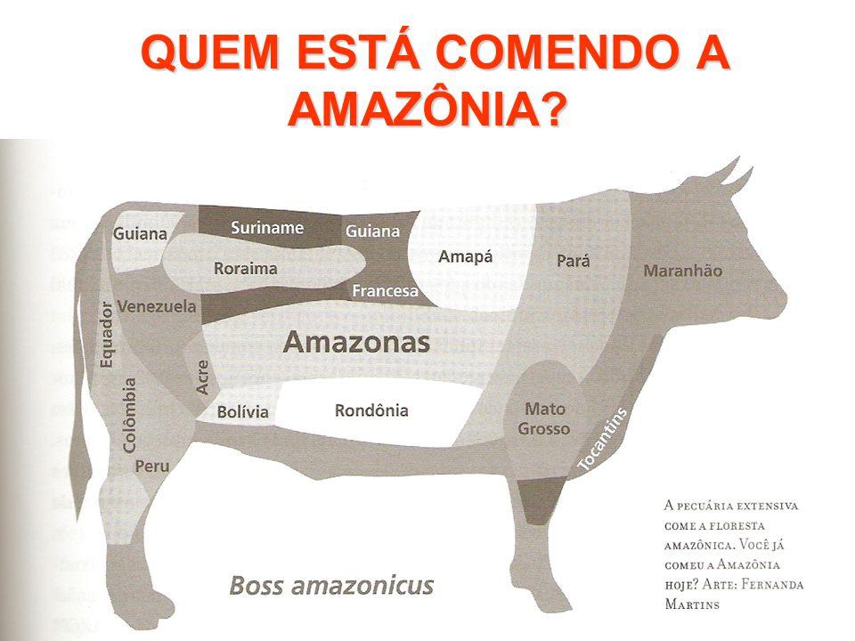 QUEM ESTÁ COMENDO A AMAZÔNIA? QUEM ESTÁ COMENDO A AMAZÔNIA?