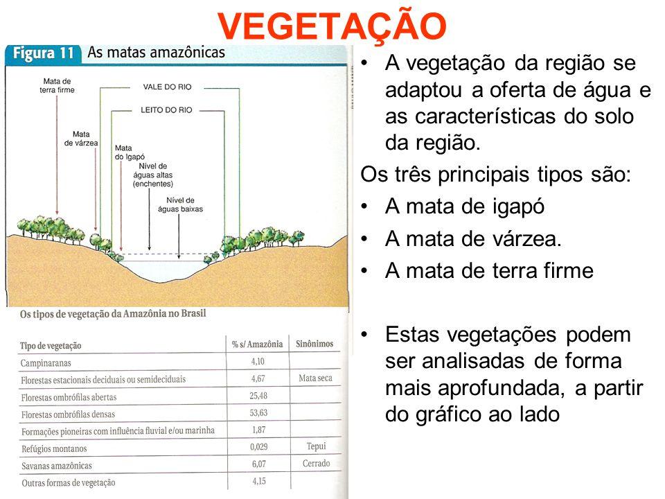 VEGETAÇÃO A vegetação da região se adaptou a oferta de água e as características do solo da região. Os três principais tipos são: A mata de igapó A ma