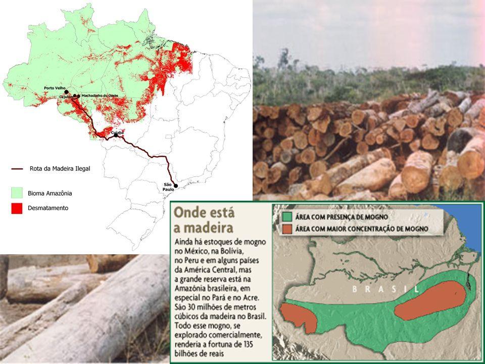Interesses dos Países Centrais Biodiversidade: a novas matérias-primas e fontes energéticas.