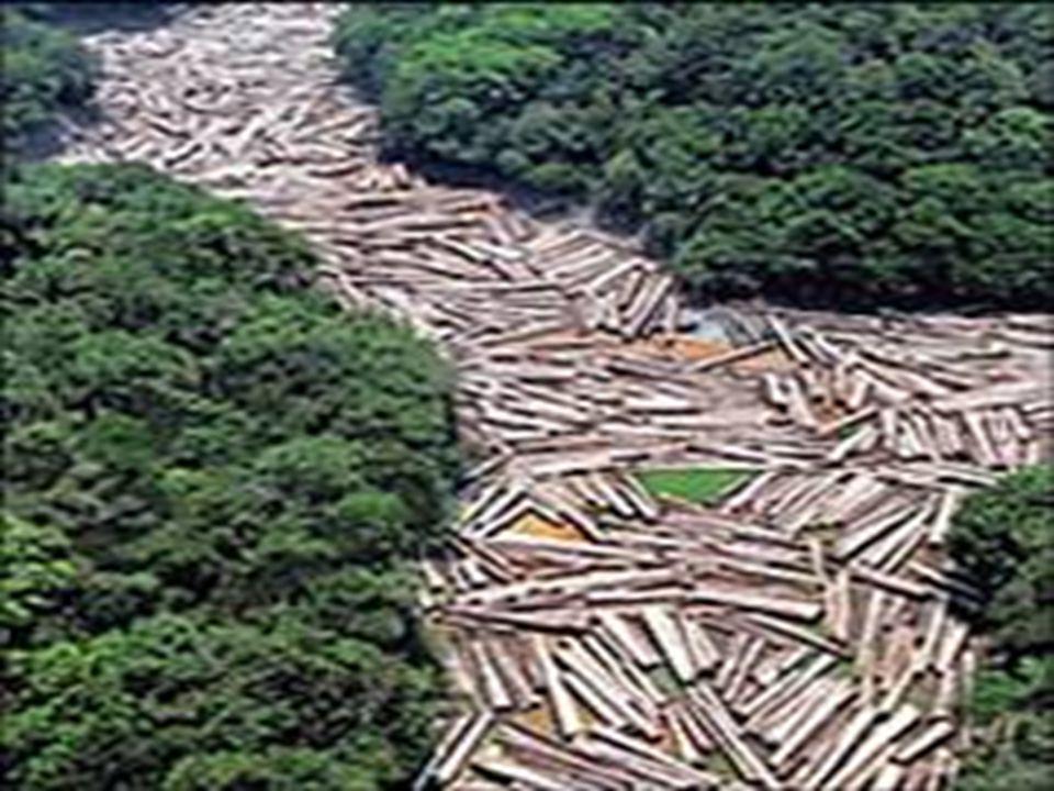 VEGETAÇÃO A vegetação da região se adaptou a oferta de água e as características do solo da região.