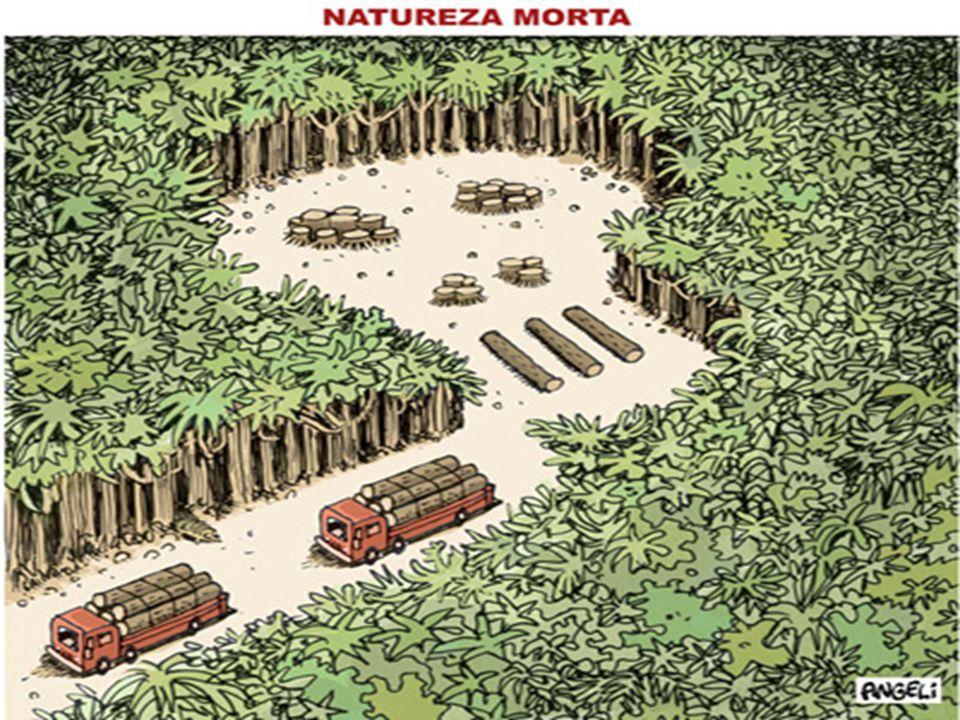 BIOMA E ENDEMISMO Apesar do Amazônia ser analisado como um bioma podemos perceber grandes variações vegetais e de ecossistemas dentro deste.