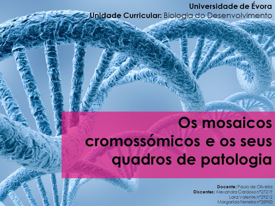 Cariótipo Imagem: http://www.ghente.org/ciencia/genetica/trissomia13.htm