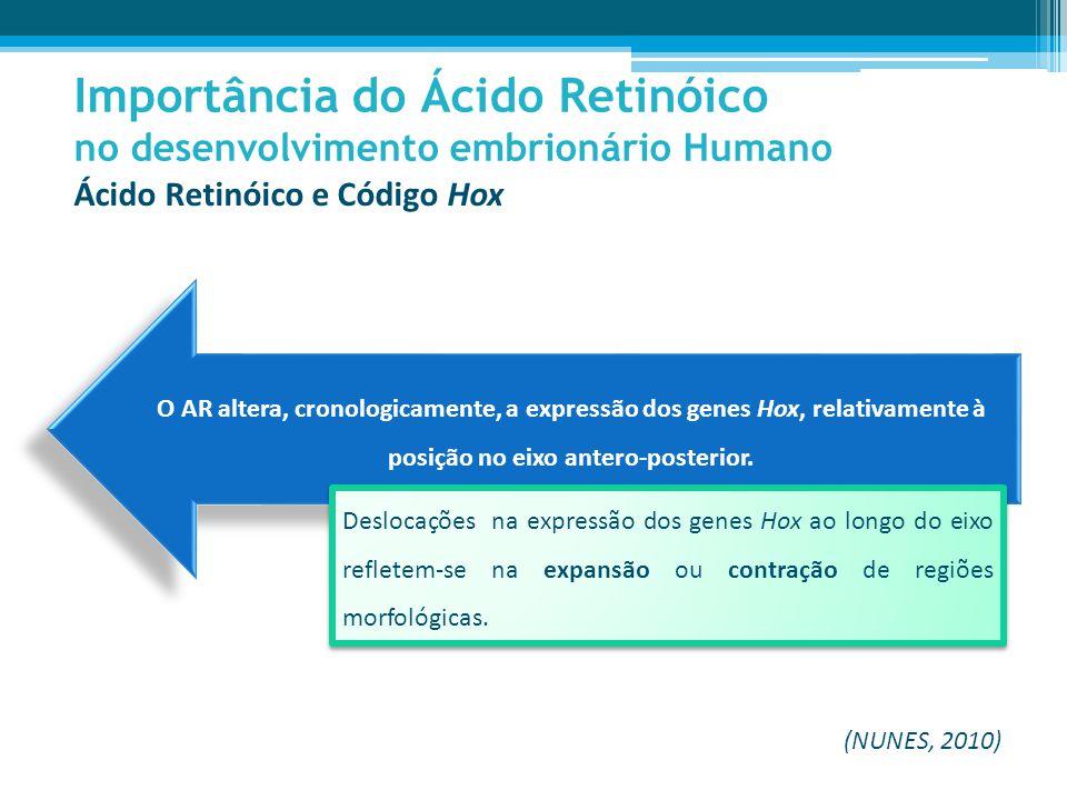 O AR altera, cronologicamente, a expressão dos genes Hox, relativamente à posição no eixo antero-posterior.