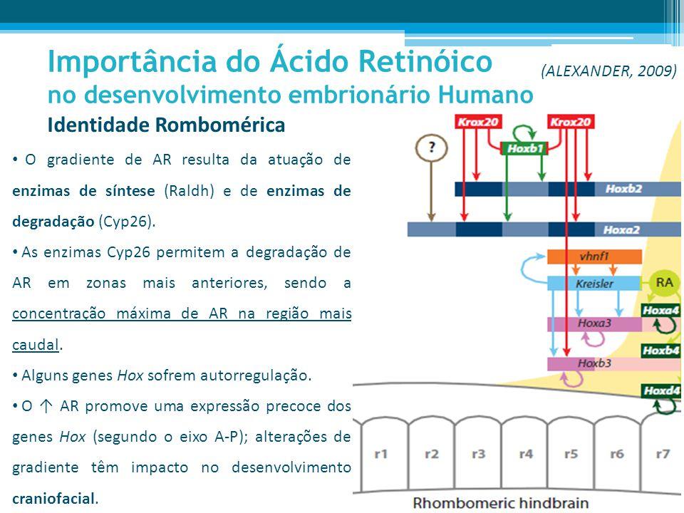 Importância do Ácido Retinóico no desenvolvimento embrionário Humano O gradiente de AR resulta da atuação de enzimas de síntese (Raldh) e de enzimas de degradação (Cyp26).