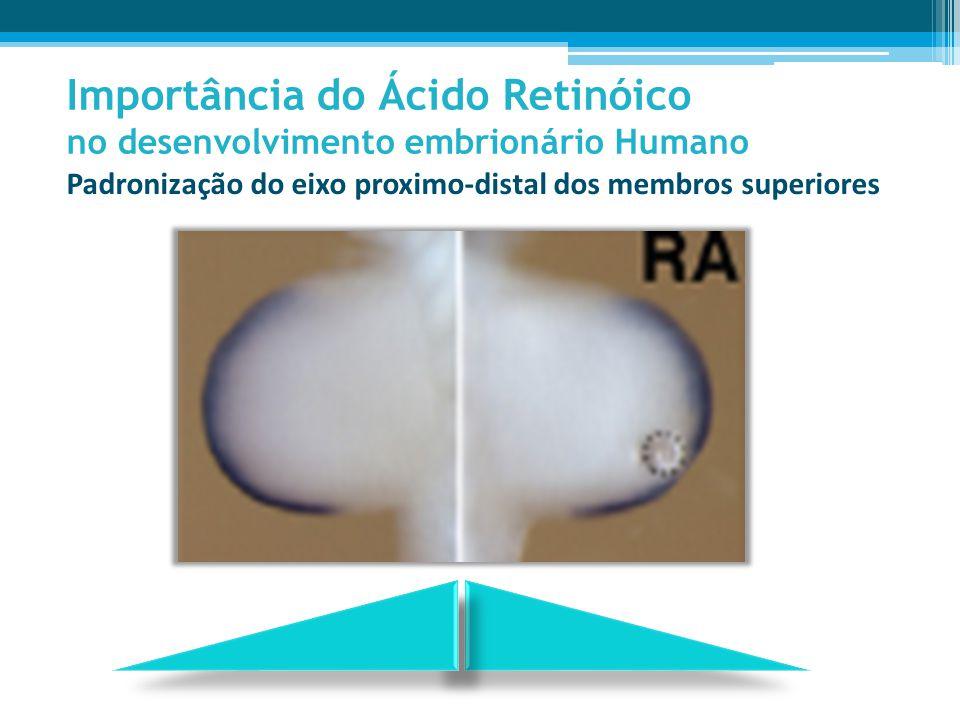 Importância do Ácido Retinóico no desenvolvimento embrionário Humano Padronização do eixo proximo-distal dos membros superiores