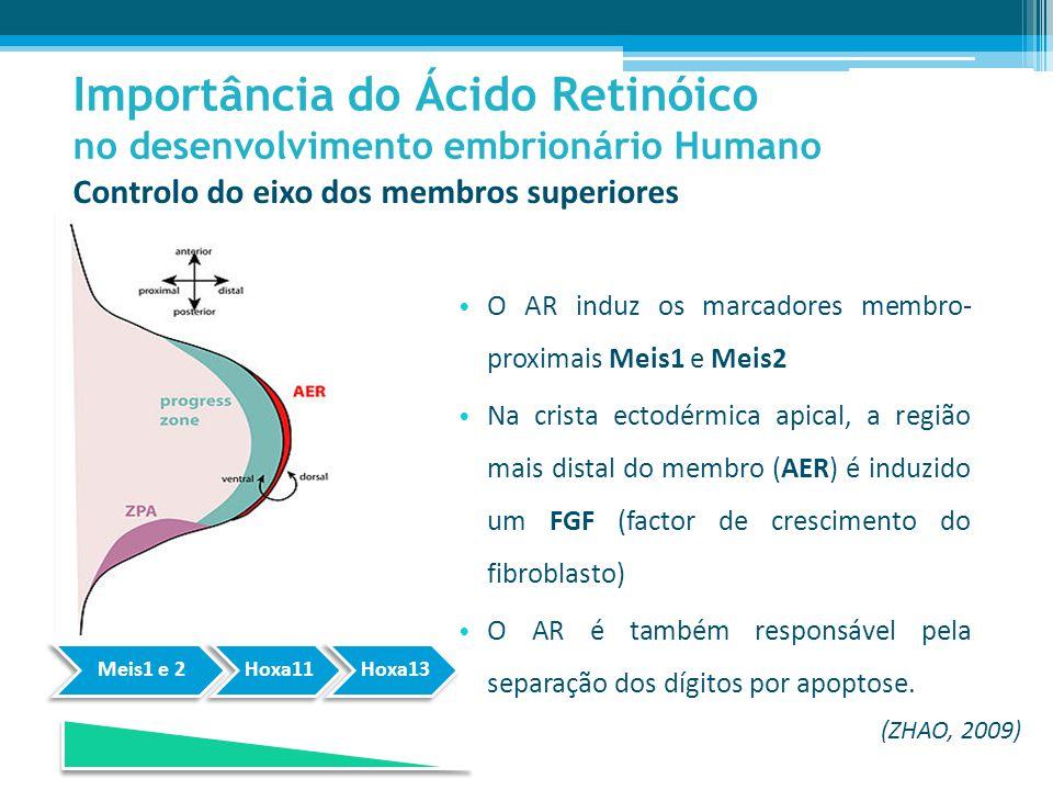 O AR induz os marcadores membro- proximais Meis1 e Meis2 Na crista ectodérmica apical, a região mais distal do membro (AER) é induzido um FGF (factor de crescimento do fibroblasto) O AR é também responsável pela separação dos dígitos por apoptose.