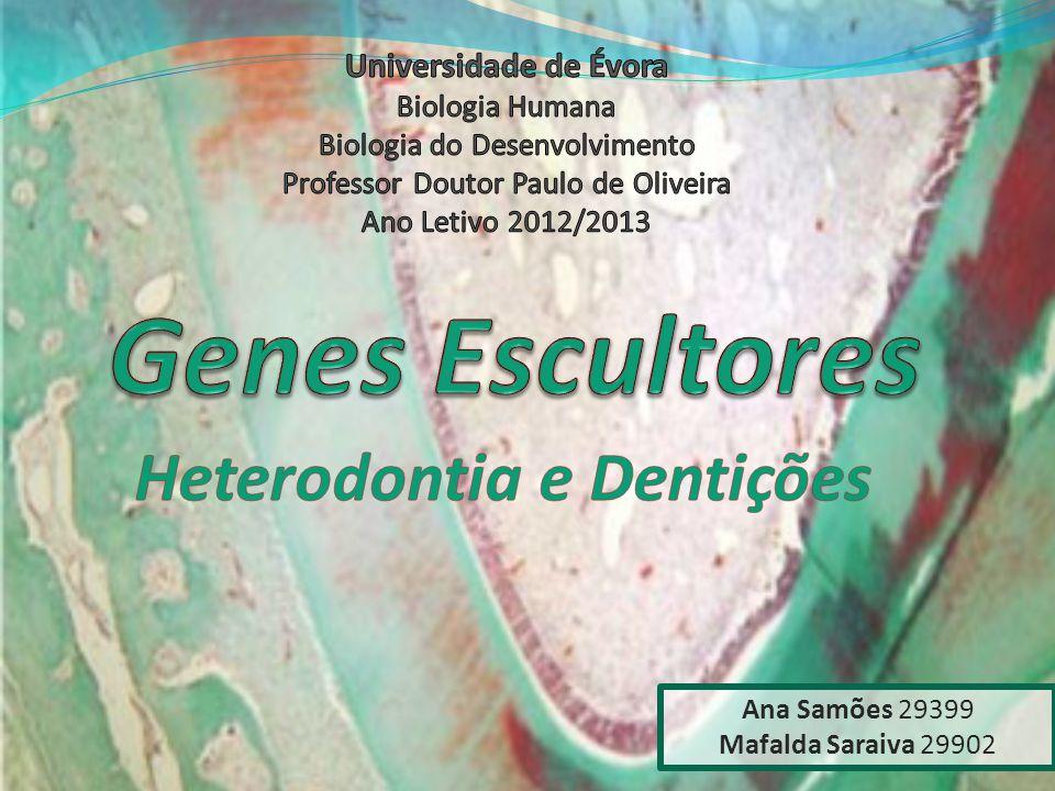Ana Samões 29399 Mafalda Saraiva 29902