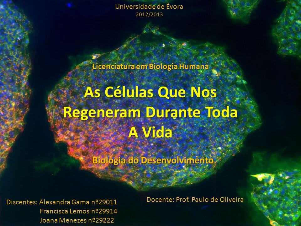 As Células Que Nos Regeneram Durante Toda A Vida Biologia do Desenvolvimento Universidade de Évora 2012/2013 Licenciatura em Biologia Humana Discentes