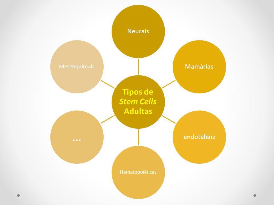 Tipos de Stem Cells Adultas NeuraisMamáriasendoteliais Hematopoiéticas … Mesenquimais