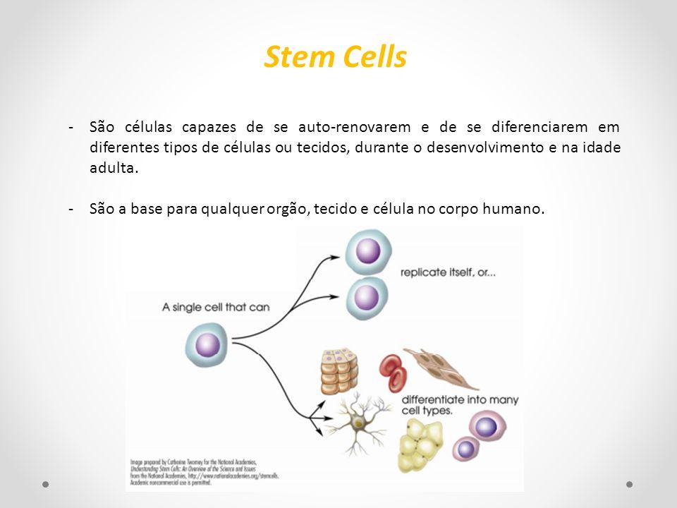 -São células capazes de se auto-renovarem e de se diferenciarem em diferentes tipos de células ou tecidos, durante o desenvolvimento e na idade adulta