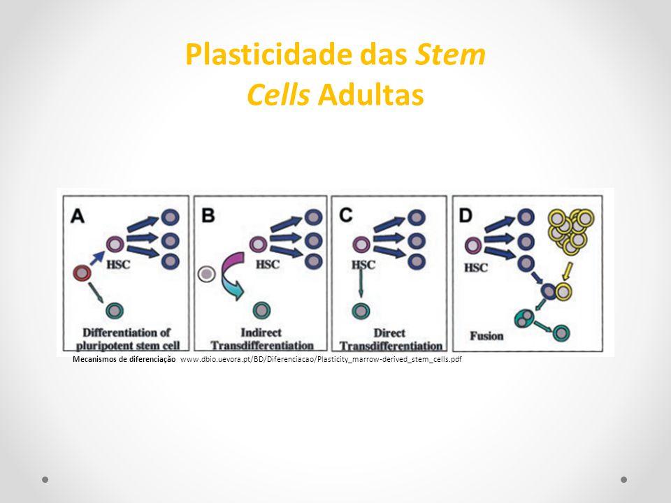 Mecanismos de diferenciação www.dbio.uevora.pt/BD/Diferenciacao/Plasticity_marrow-derived_stem_cells.pdf