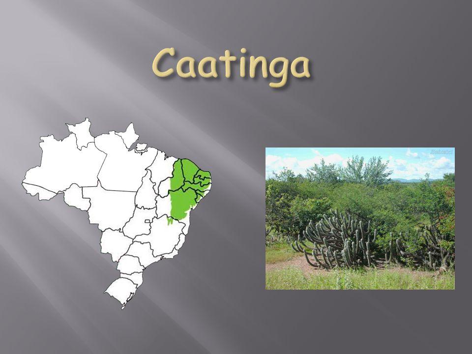 Características: A vegetação que se apresentava mais dispersa, tinha se transformado em um emaranhado de arbustos espinhentos e secos, formando uma barreira quase intransponível.