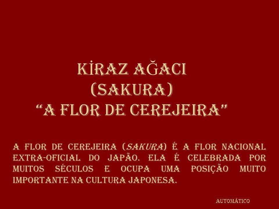 K İ RAZ A Ğ ACI (SAKURA) A flor de cerejeira A flor de cerejeira (sakura) é a flor nacional extra-oficial do Japão.