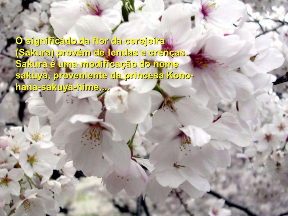 O significado da flor da cerejeira (Sakura) provém de lendas e crenças.