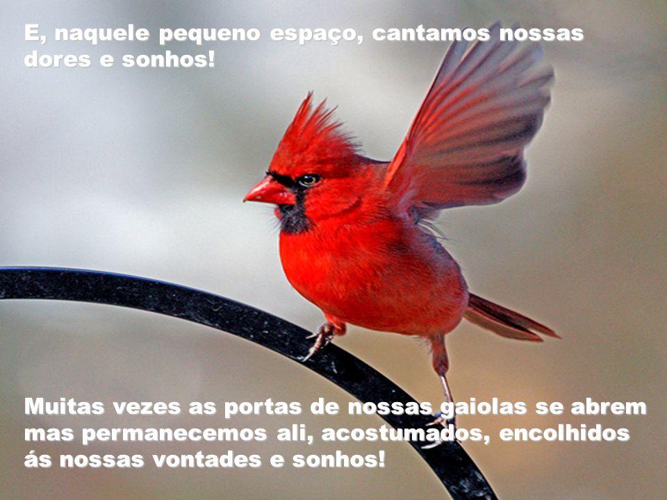 Passamos uma vida presos, qual pássaros em suas gaiolas! Medo de amar, de olhar a vida de frente...