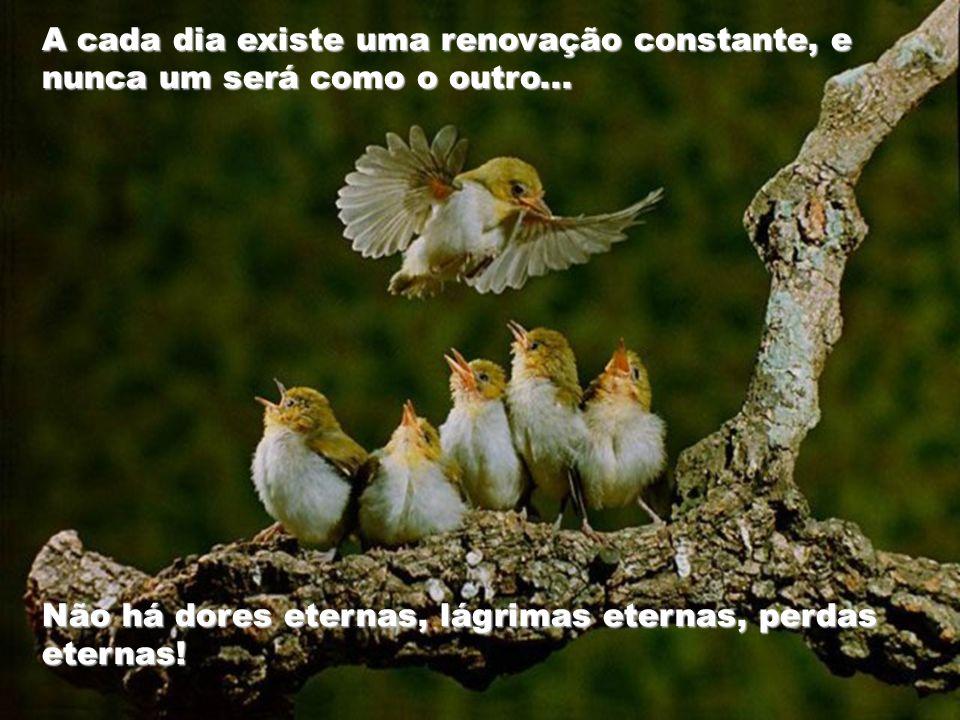 Como as águias, tente enxergar as pequeninas coisas à sua volta e saiba apreciá-las, dando um sentido novo à sua vida.