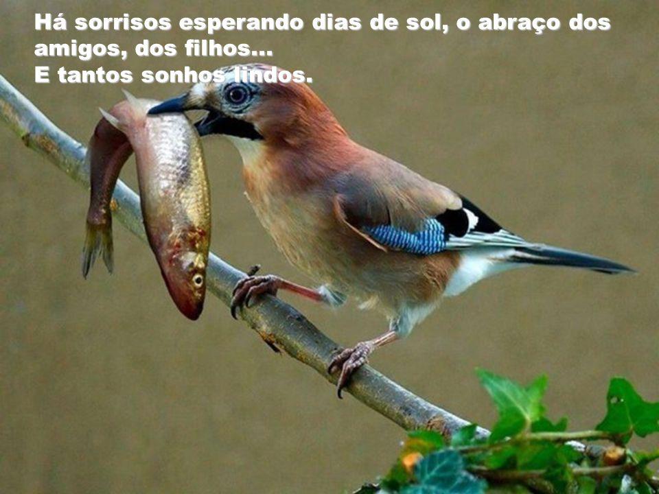 A cada dia existe uma renovação constante, e nunca um será como o outro...