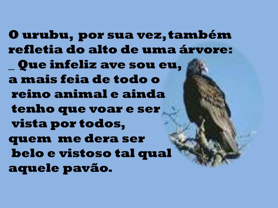 O urubu, por sua vez, também refletia do alto de uma árvore: _ Que infeliz ave sou eu, a mais feia de todo o reino animal e ainda tenho que voar e ser vista por todos, quem me dera ser belo e vistoso tal qual aquele pavão.