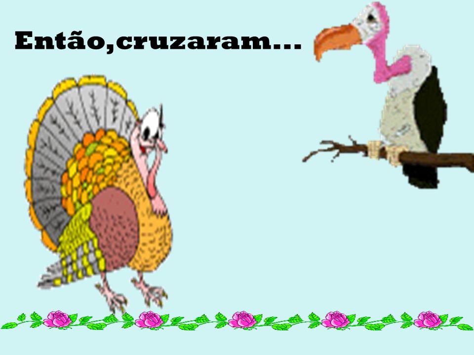 Foi quando ambas as aves tiveram a brilhante idéia em comum e se juntaram para discorrer sobre ela: Um cruzamento seria ótimo para ambos, gerando um d