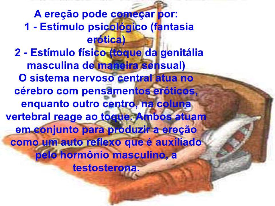 086 A ereção pode começar por: 1 - Estímulo psicológico (fantasia erótica) 2 - Estímulo físico (toque da genitália masculina de maneira sensual) O sistema nervoso central atua no cérebro com pensamentos eróticos, enquanto outro centro, na coluna vertebral reage ao toque.