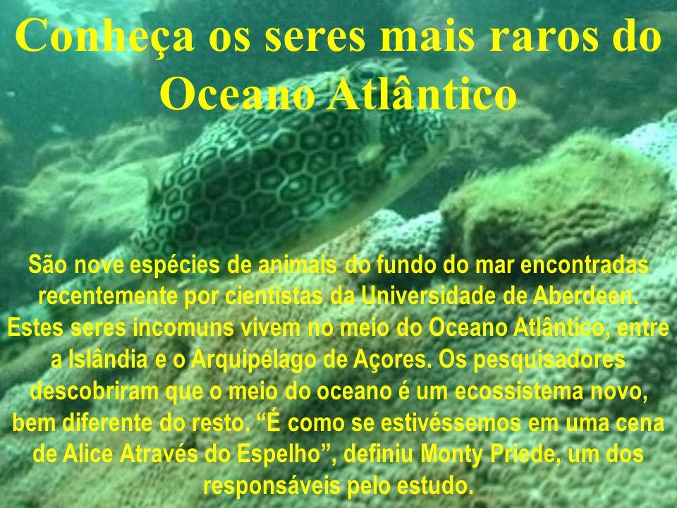 Conheça os seres mais raros do Oceano Atlântico São nove espécies de animais do fundo do mar encontradas recentemente por cientistas da Universidade de Aberdeen.