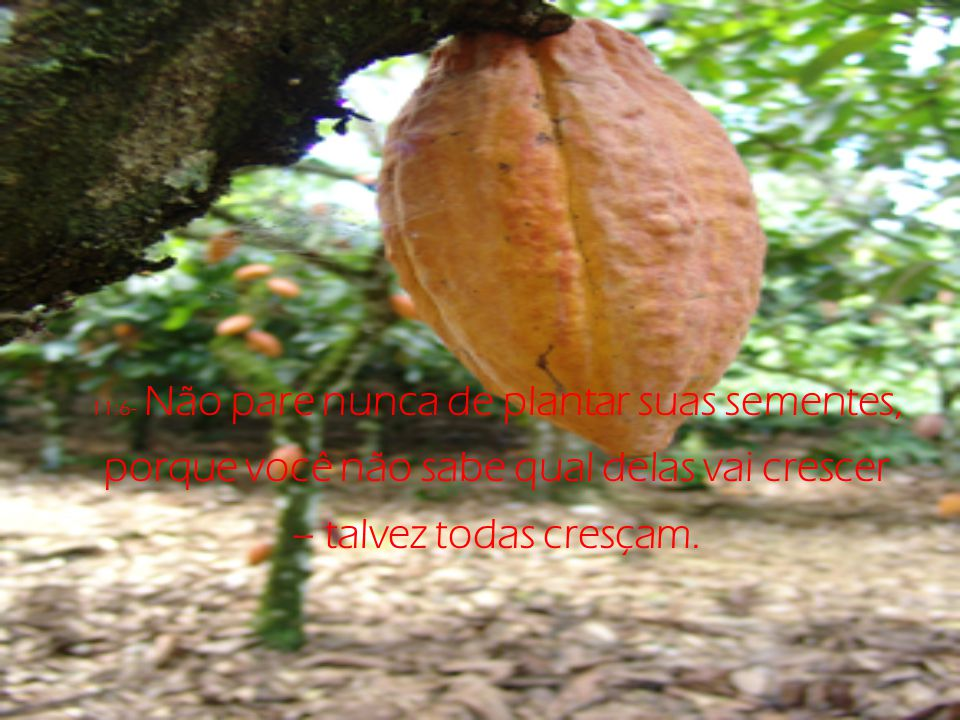 11:6- Não pare nunca de plantar suas sementes, porque você não sabe qual delas vai crescer – talvez todas cresçam.