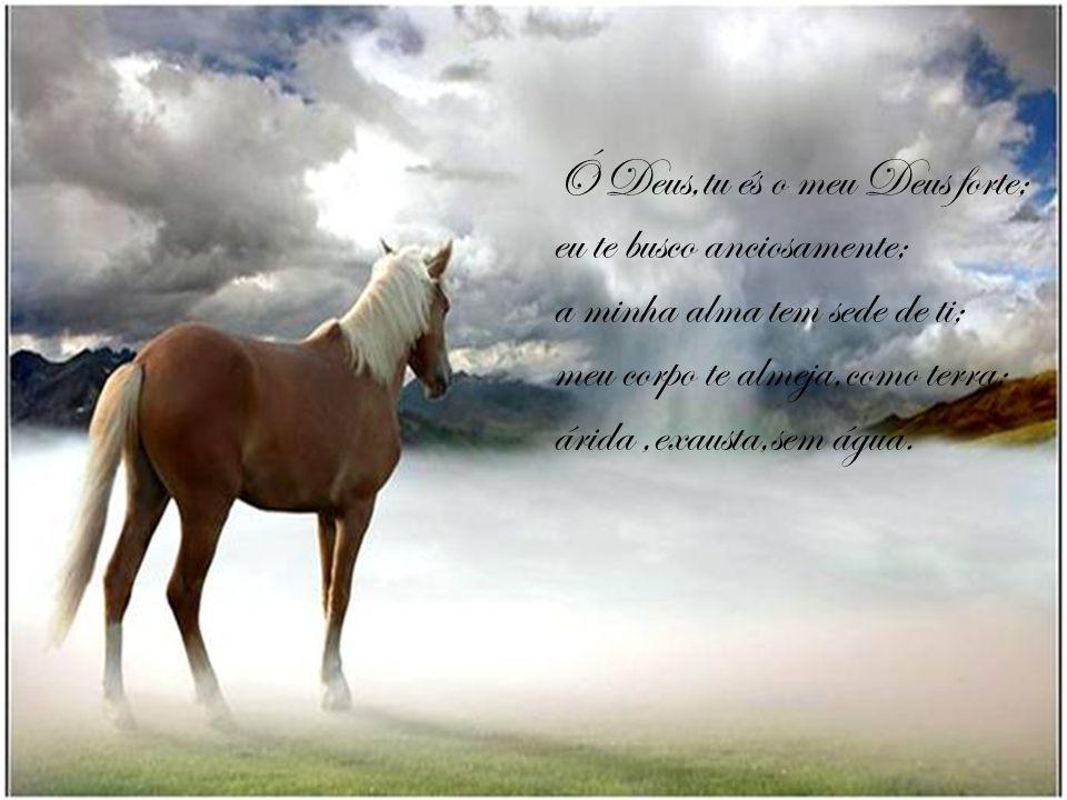Buscando a Deus Salmos cap:63 V 01 ao 11