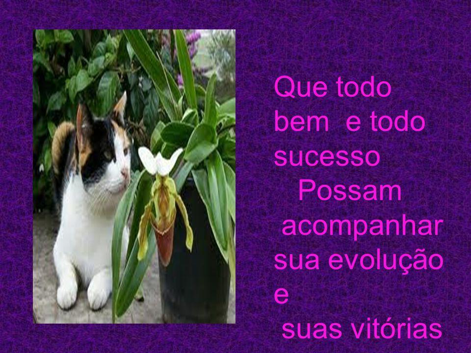 Que todo bem e todo sucesso Possam acompanhar sua evolução e suas vitórias