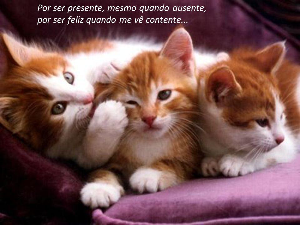 Pela pureza dos seus sentimentos, pela presença em todos os momentos...