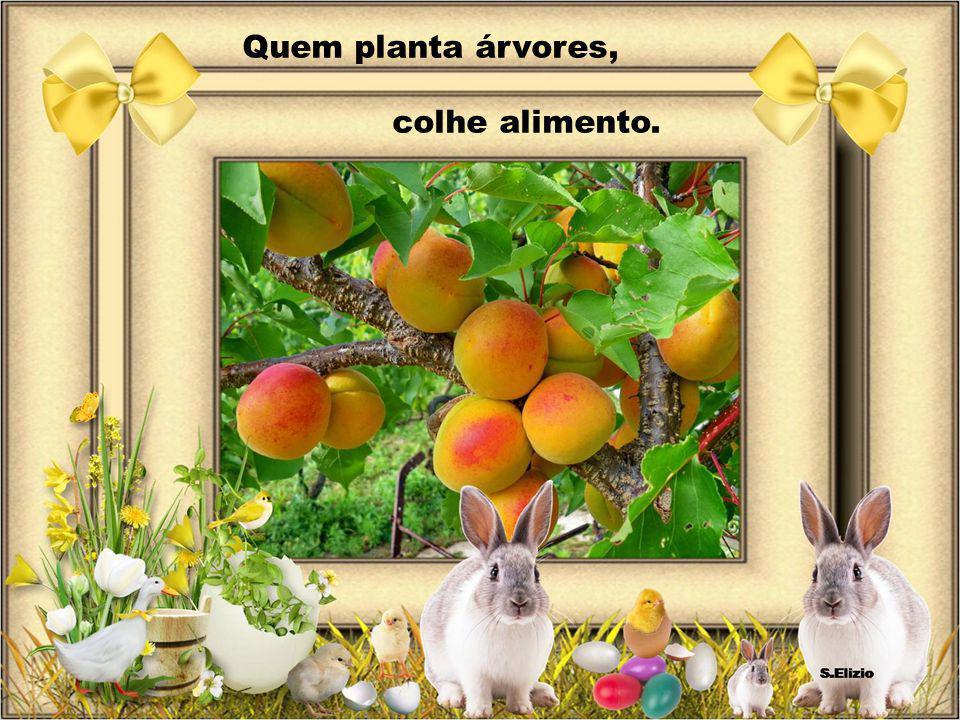 Quem planta árvores, colhe alimento.