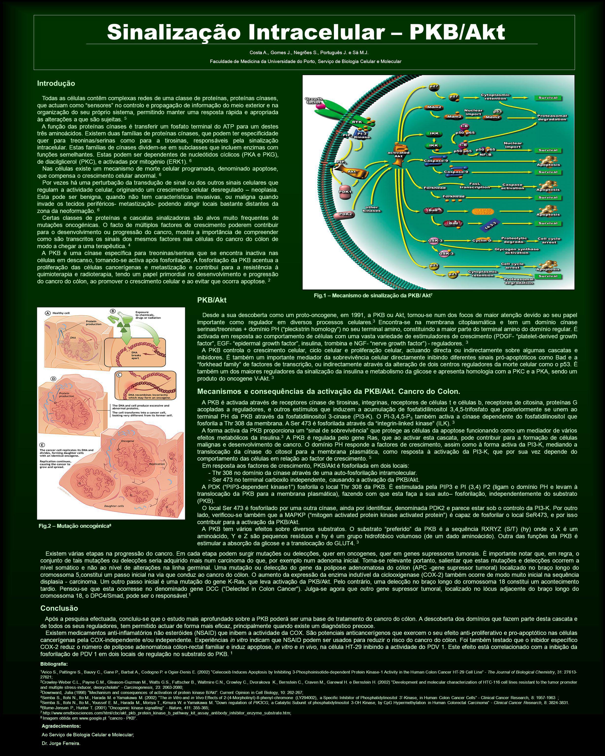 Sinalização Intracelular – PKB/Akt Costa A., Gomes J., Negrões S., Português J. e Sá M.J. Faculdade de Medicina da Universidade do Porto, Serviço de B