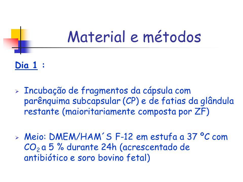 Material e métodos Dia 1 : Incubação de fragmentos da cápsula com parênquima subcapsular (CP) e de fatias da glândula restante (maioritariamente compo