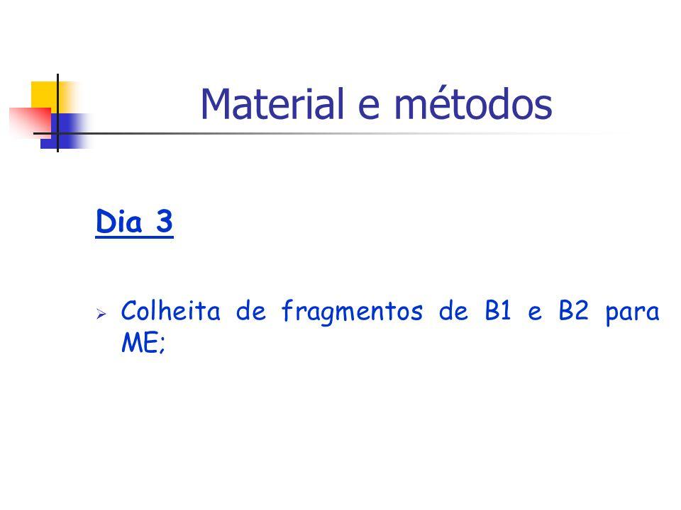 Dia 3 Colheita de fragmentos de B1 e B2 para ME; Material e métodos