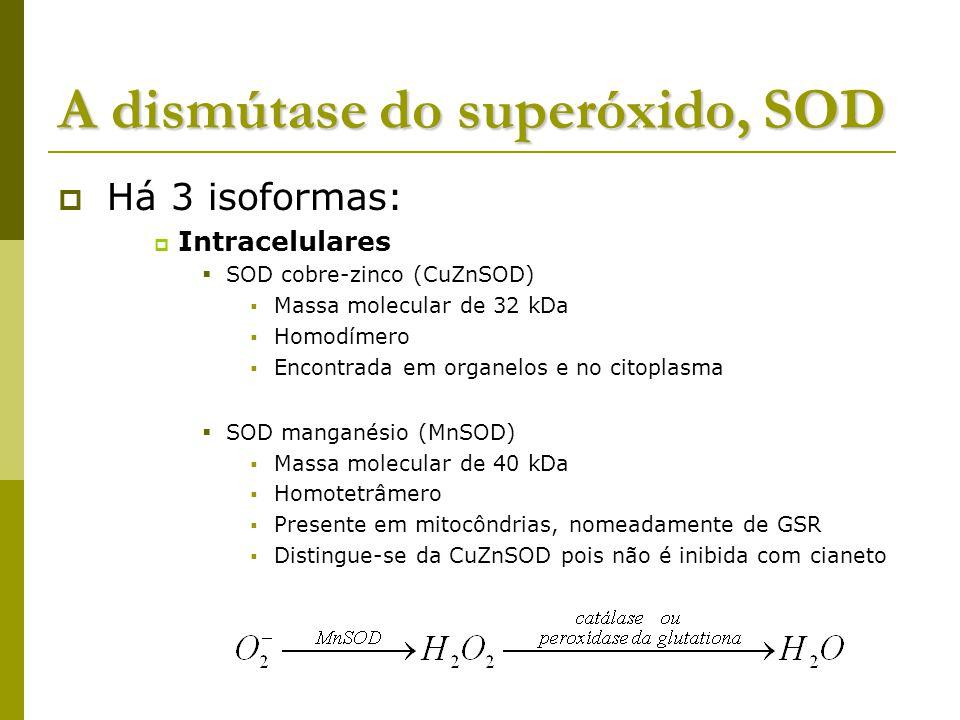 A dismútase do superóxido, SOD Há 3 isoformas: Intracelulares SOD cobre-zinco (CuZnSOD) Massa molecular de 32 kDa Homodímero Encontrada em organelos e no citoplasma SOD manganésio (MnSOD) Massa molecular de 40 kDa Homotetrâmero Presente em mitocôndrias, nomeadamente de GSR Distingue-se da CuZnSOD pois não é inibida com cianeto