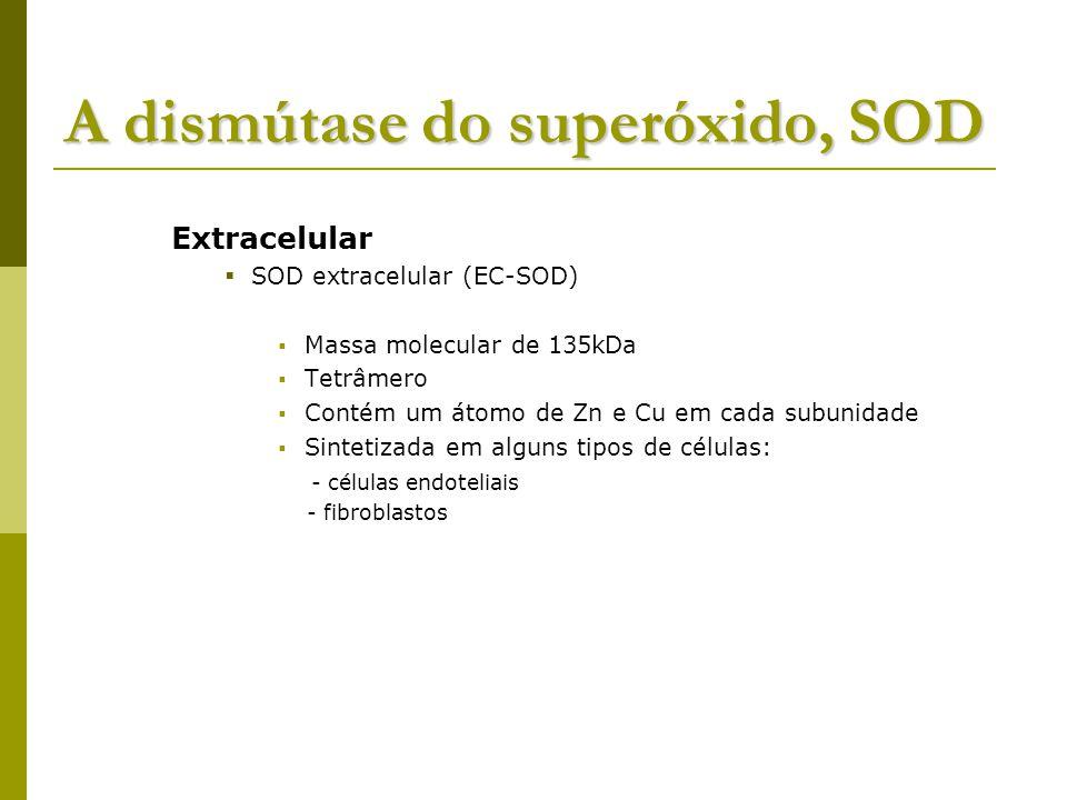 A dismútase do superóxido, SOD Extracelular SOD extracelular (EC-SOD) Massa molecular de 135kDa Tetrâmero Contém um átomo de Zn e Cu em cada subunidade Sintetizada em alguns tipos de células: - células endoteliais - fibroblastos