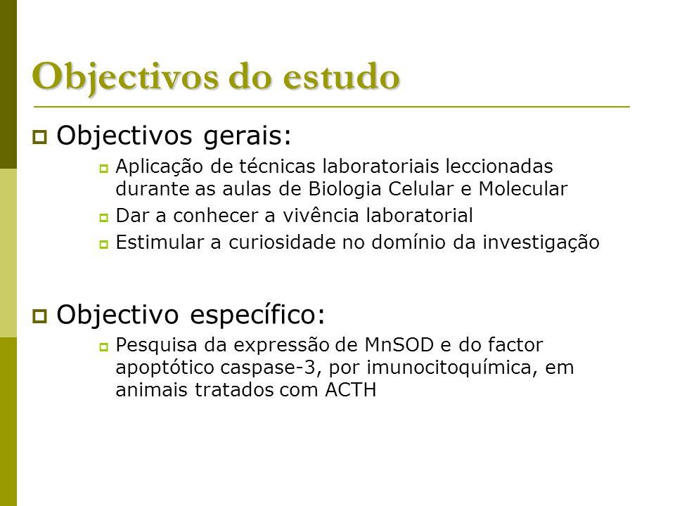 Objectivos do estudo Objectivos gerais: Aplicação de técnicas laboratoriais leccionadas durante as aulas de Biologia Celular e Molecular Dar a conhecer a vivência laboratorial Estimular a curiosidade no domínio da investigação Objectivo específico: Pesquisa da expressão de MnSOD e do factor apoptótico caspase-3, por imunocitoquímica, em animais tratados com ACTH