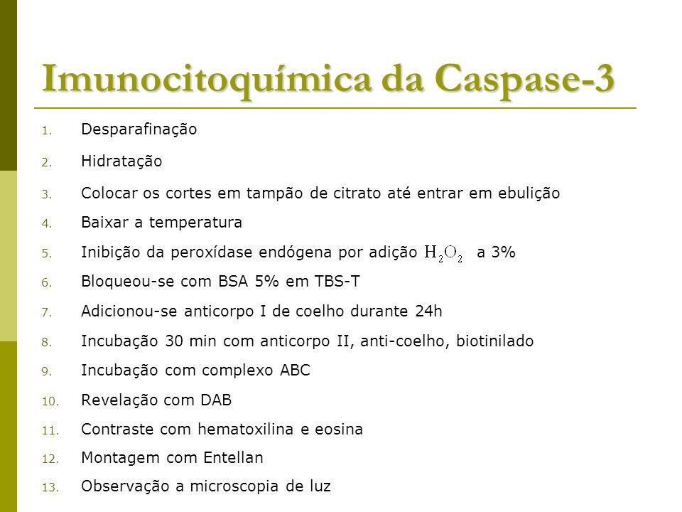 Imunocitoquímica da Caspase-3 1.Desparafinação 2.