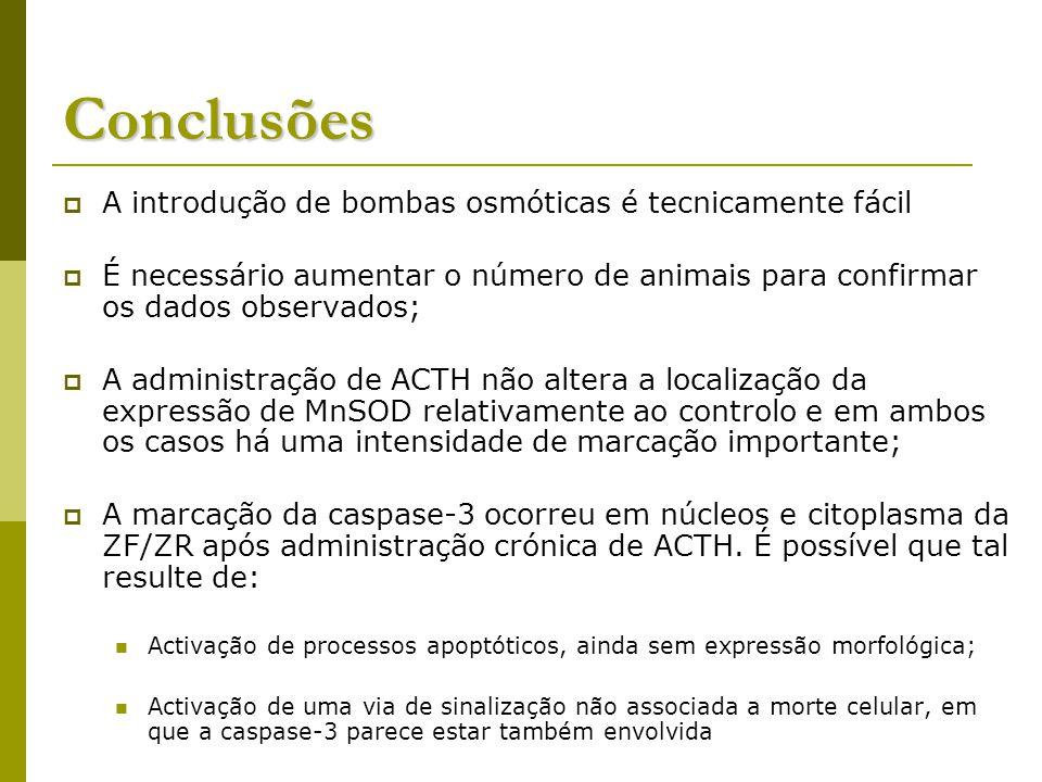 Conclusões A introdução de bombas osmóticas é tecnicamente fácil É necessário aumentar o número de animais para confirmar os dados observados; A administração de ACTH não altera a localização da expressão de MnSOD relativamente ao controlo e em ambos os casos há uma intensidade de marcação importante; A marcação da caspase-3 ocorreu em núcleos e citoplasma da ZF/ZR após administração crónica de ACTH.