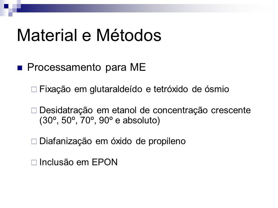 Material e Métodos Processamento para ME Fixação em glutaraldeído e tetróxido de ósmio Desidatração em etanol de concentração crescente (30º, 50º, 70º